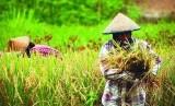 Lahan pertanian, salah satu faktor penopang ketahanan pangan nasional (ilustrasi)