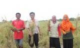 Laznas LMI menggandeng Lazis PLN KITSBS mengulirkan program pertanian
