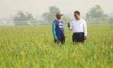 Menteri Pertanian Amran Sulaiman bersama seorang petani
