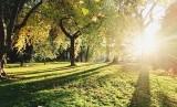 Pancara sinar matahari