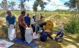 Para petani padi dan jagung di Oku Selatan tetap melaksanakan panen raya walupun merebaknya wabah virus corona.