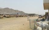 Pasar Hewan Kakiyah salah satu tempat favorit penyembelihan dam
