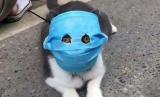 Pemilik hewan peliharaan di China memasangkan masker bagi kucing peliharaannya agar terhindar dari infeksi virus corona tipe baru, Covid-19.