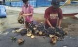 Peneliti memisahkan sampah plastik dari perut paus yang terdampar di Taman Nasional Wakatobi, Sulawesi Tenggara. Pengelolaan sampah yang baik diharapkan menjaga kelestarian terumbu karang Wakatobi. Ilustrasi.