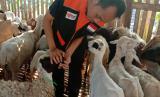 Permintaan terus meningkat peternak desa berdaya termotivasi pelihara ternak.