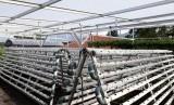 Pertanian sistem hidroponik vertikultur di BBPP Lembang hasilkan Rp 6,7 juta per bulan.