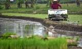 Petani menanam benih padi dengan mesin penanam (transplanter) di lahan persawahan (ilustrasi)
