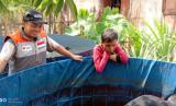 Peternak berdaya binaan Rumah Zakat melakukan panen ikan lele.