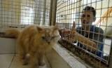Petugas melakukan perawatan dan penitipan hewan kepada sejumlah kucing yang dititipkan pemiliknya di Pondok Pengayom Satwa Ragunan, Jakarta Selatan, (26/7). (Republika/Rakhmawaty La'lang)