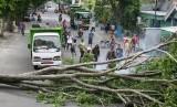 Pohon tumbang.   (ilustrasi)