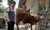 Posyandu ternak Desa Berdaya Tanggungan kembali demi ekonomi berdaya.