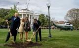 Presiden AS Donald Trump dan Presiden Prancis Emmanuel Macron menanam pohon ek simbol persahabatan di sisi selatan Gedung Putih pada April 2018. Keduanya ditemani ibu negara masing-masing.