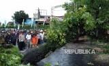 Pohon Tumbang (Ilustrasi)