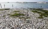 Perlu Riset Terkait Fenomena Kematian Massal Ikan dan Gempa