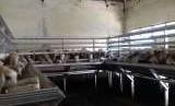 Rumah Potong Hewan (RPH) kota bogor,jl KH Abdullah bin nuh kampung pilar keluarahan bubulak kec bogor barat kota bogor.
