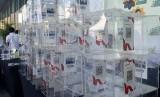 Sebanyak 1.000 rumah ibadah mencetak rekor MURI setelah melakukan elektronifikasi kotak amal dalam Festival Ekonomi Syariah (Fesyar) Indonesia 2019 di Surabaya, Sabtu (9/11).