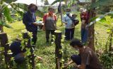 Sebanyak 9 orang mahasiswa IPB yang sedang mengadakan Kuliah Kerja Nyata (KKN) di di Desa Berdaya Pamoyanan yang merupakan salah satu lokasi pemberdayaan Rumah Zakat, berusaha membuat edukasi pertanian kepada para pemuda sebagai upaya untuk menumbuhkan minat dan partisipasi di bidang pertanian.