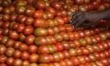 Sebutir tomat pasok 40 persen kebutuhan harian minimum vitamin C.