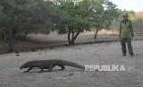 LIPI: Pembangunan Jurassic Park tak Ganggu Komodo