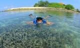 Seorang wisatawan tengah menikmati keindahan kehidupan bawah laut. Indonesia memang dikenal memiliki potensi wisata bahari yang tinggi (ilustrasi)