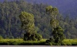 Taman Nasional Lore Lindu dengan Danau Tambing di dalamnya.