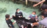 Tiga eko lumba-lumba tengah dievakuasi di Pulau Menjangan Besar, Karimun Jawa, dari kolam yang berisi 30 ikan Hiu. Sayangnya, 2 dari 3 Lumba-lumba tersebut mati karena gigitan Hiu.