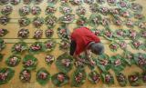 Umat muslim menata daging kurban di atas daun jati sebelum didistribusikan saat perayaan Idul Adha.