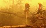Upaya petugas memadamkan kebakaran hutan dan lahan (Ilustrasi)